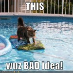 funny-pictures-cat-surfing-pool